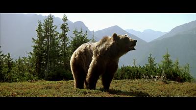 Фильм Медведь 1988