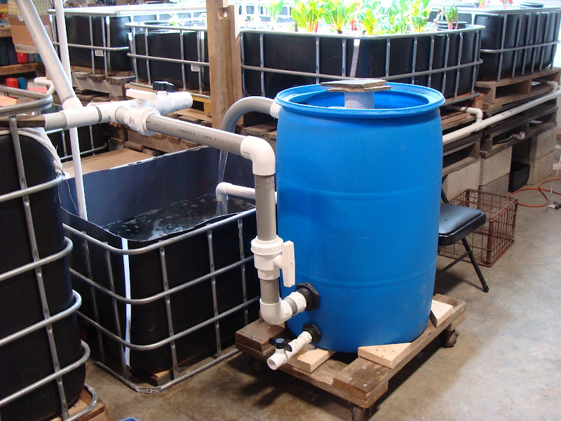Learn to aquaponic aquaponics sediment tank for Aquaponics filter