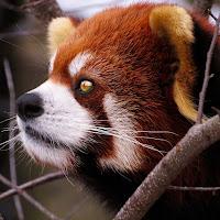 Reuk's avatar