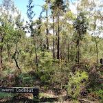 The overgrown Warriwarri Lookou (235766)