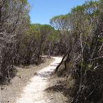 Kangarutha Track north of Wallagoot Gap (104470)