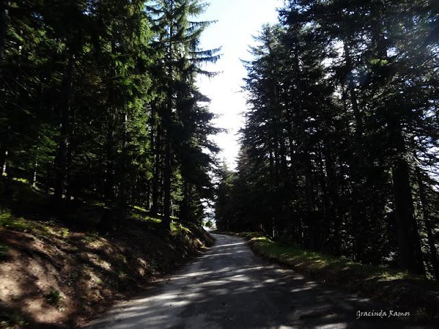 passeando - Passeando pela Suíça - 2012 - Página 9 DSC01974