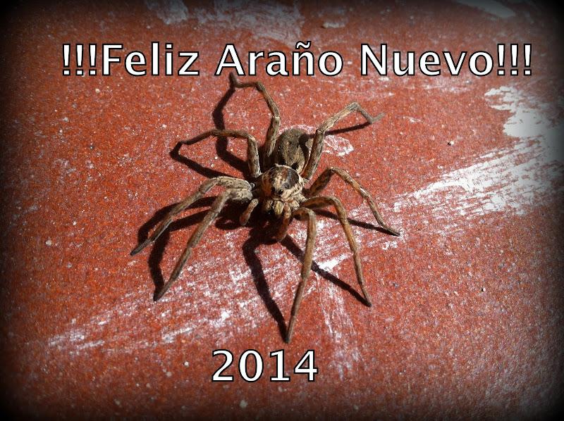 Feliz Araño Nuevo / Happy New Year 2014