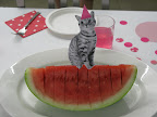 This cat has a toothpick taped to the back and is perched atop our watermelon.