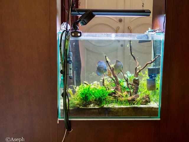 87 Ide Desain Lampu Aquascape HD Gratid Yang Bisa Anda Tiru