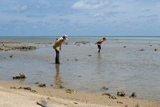 Ищут молюсков.