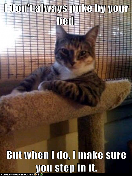 photo of the most interesting cat...I don't always puke by your bed...