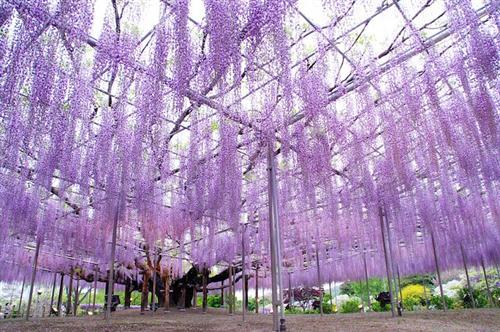 உலகின் மிகவும் அழகான மரம் இதுதான் : புகைப்படங்கள் Tree11