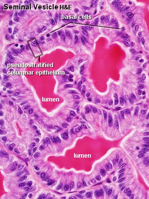 What Is the Function of Vascular Tissue  Referencecom