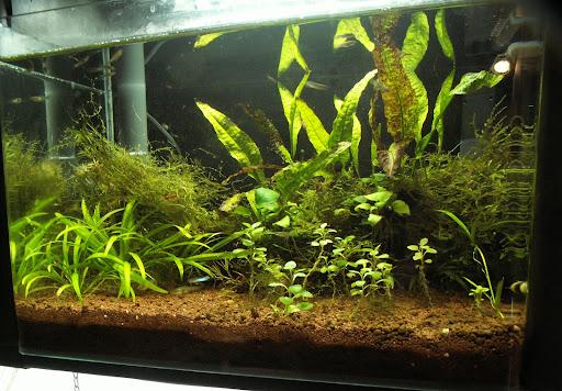 Aquarium de 120 litres