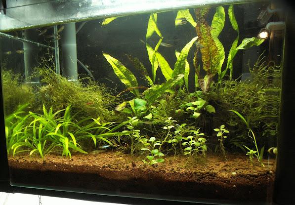 Aquariums plantés Aquarium+35+litres+n+3+11+02+2013