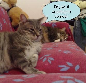 Gatti comodi
