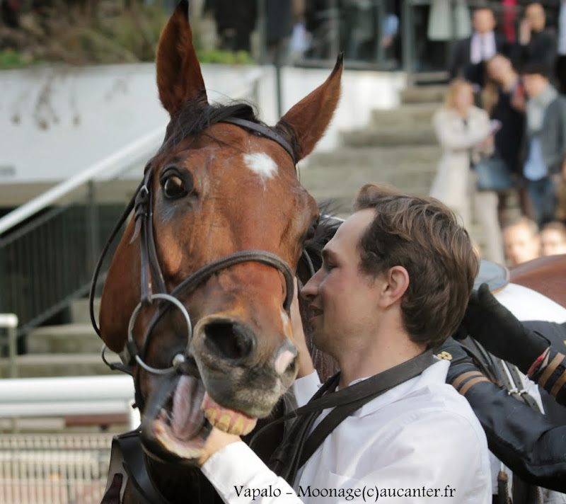Photos Auteuil 2-11-2014 (48h de l'obstacle) IMG_5542