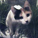 kitten Masya tricolor cat Masjanja pet котенок трехцветный кошка Мася