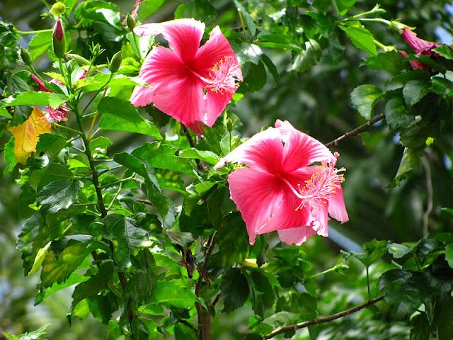 Из зимы в лето. Филиппины 2011 - Страница 5 IMG_0050