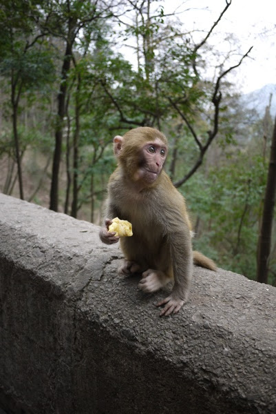 baby monkey eating food while sitting on a ledge