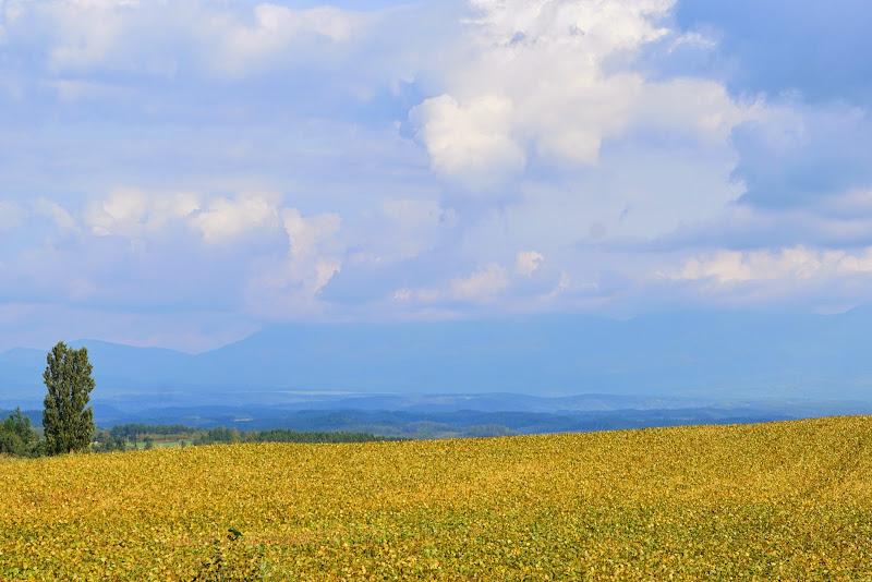 美瑛 ルベシベの丘 写真13