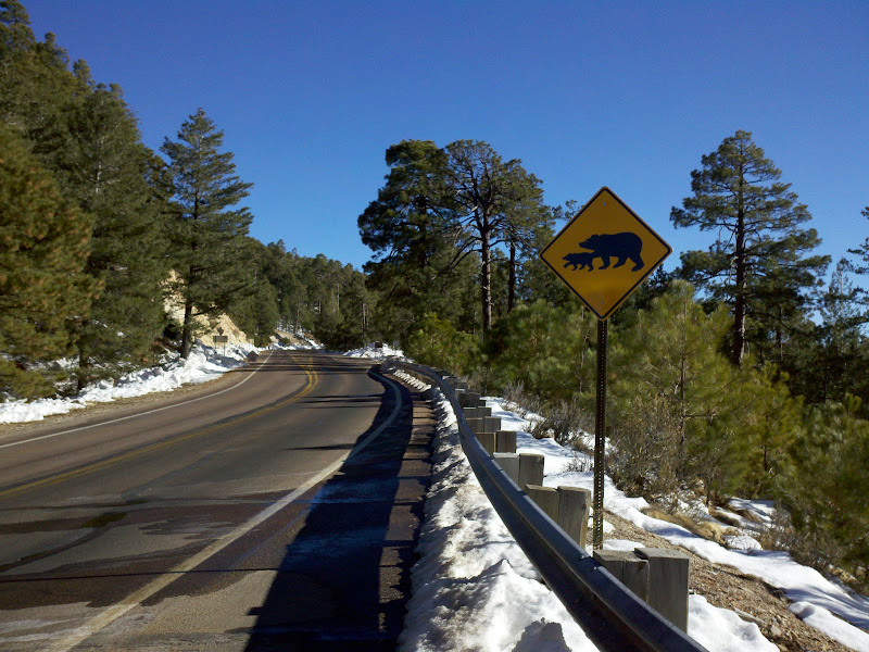 Mount Lemmon • Bear Country