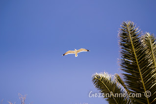 Cunda sahilinde uçan martı