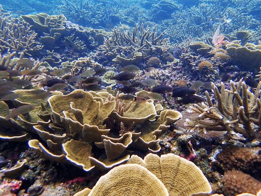 Reef outside Small Lagoon, Miniloc Island, Palawan, Philippines.