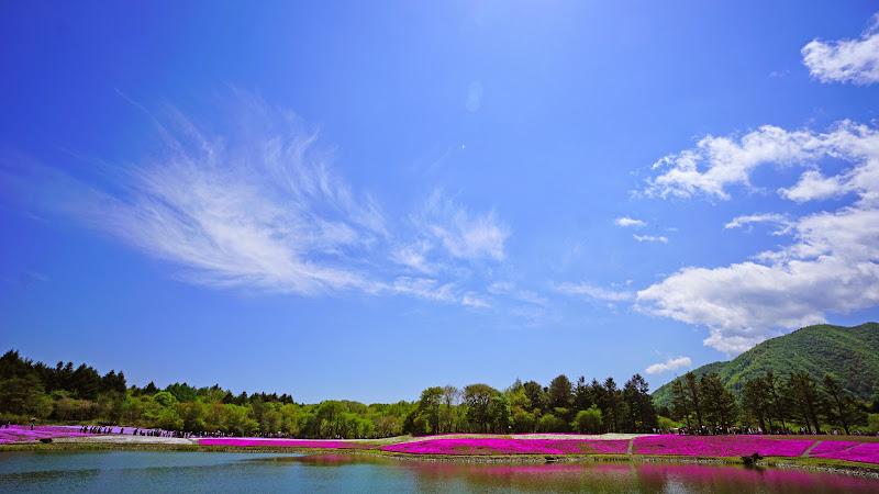 富士芝桜まつり 写真10