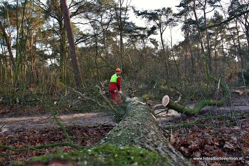 Houtoogst in de bossen van overloon 17-01-2012 (13).JPG