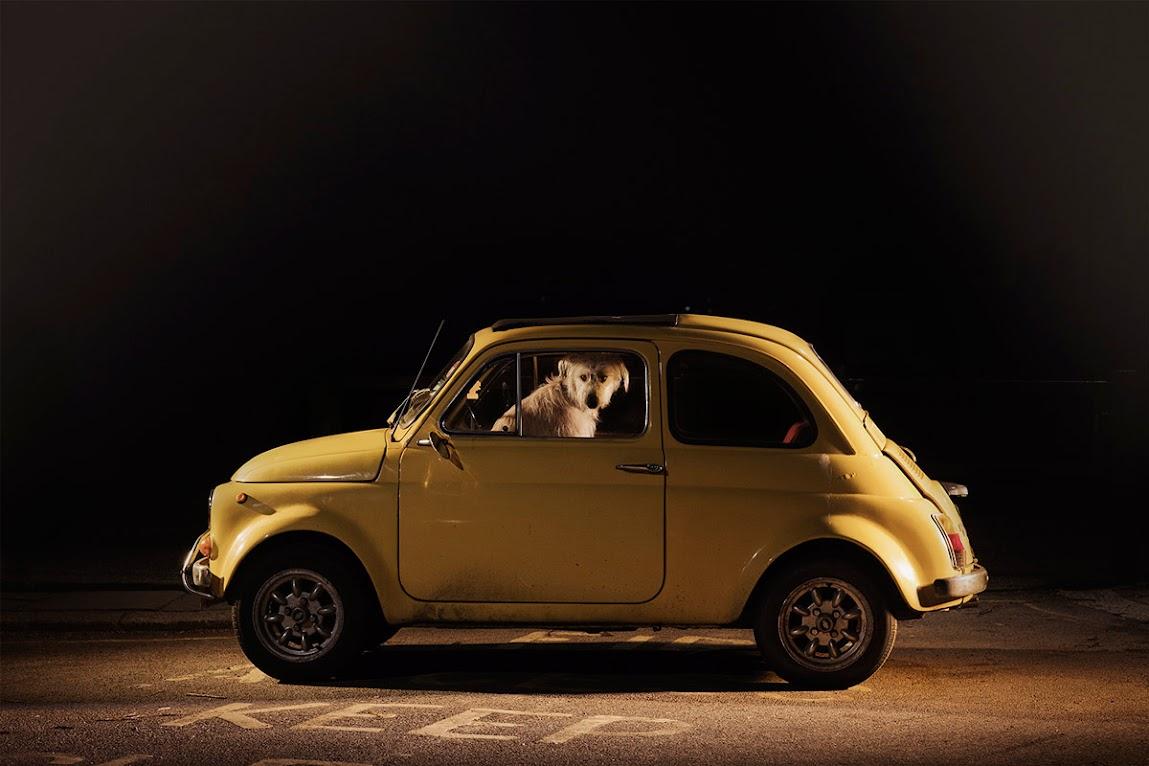 *被鎖在車內沉默的狗:攝影師Martin Usborne 黑暗呈現! 2