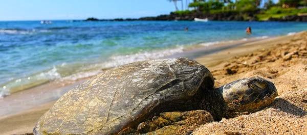 Kailua-Kona - Hawai