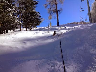 Border Terrier Charly zieht Herrchen am Schluss der Schneeschuhtour hoch.