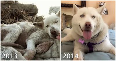 A transformacao após salvamento de uma cadela abandonada a morrer numa lixeira