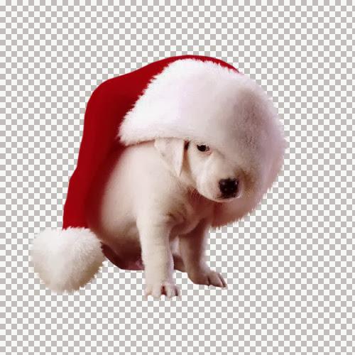 1258_Natal_dog_2_AR_32=AEAlejandra_Rosales-9-11-06.jpg