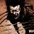 burhan zaman avatar image