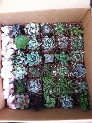 My Make Up Shipment Of 30 Plants