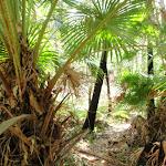 Walk past palms (248380)