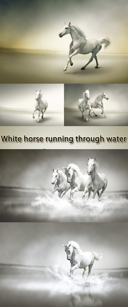 Stock Photo: White horse running through water