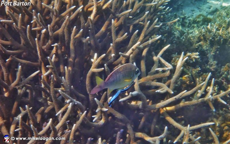 Wide Reef