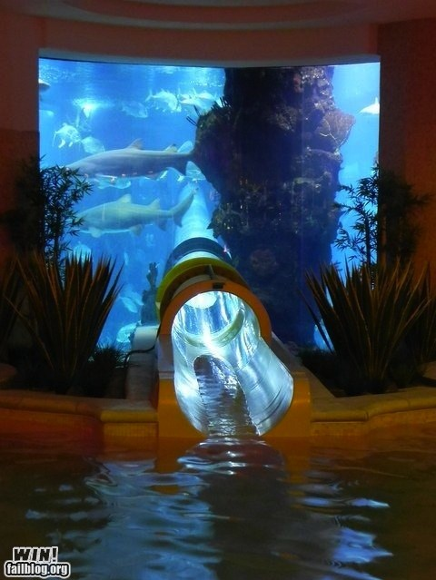 photo of a water slide going through an aquarium