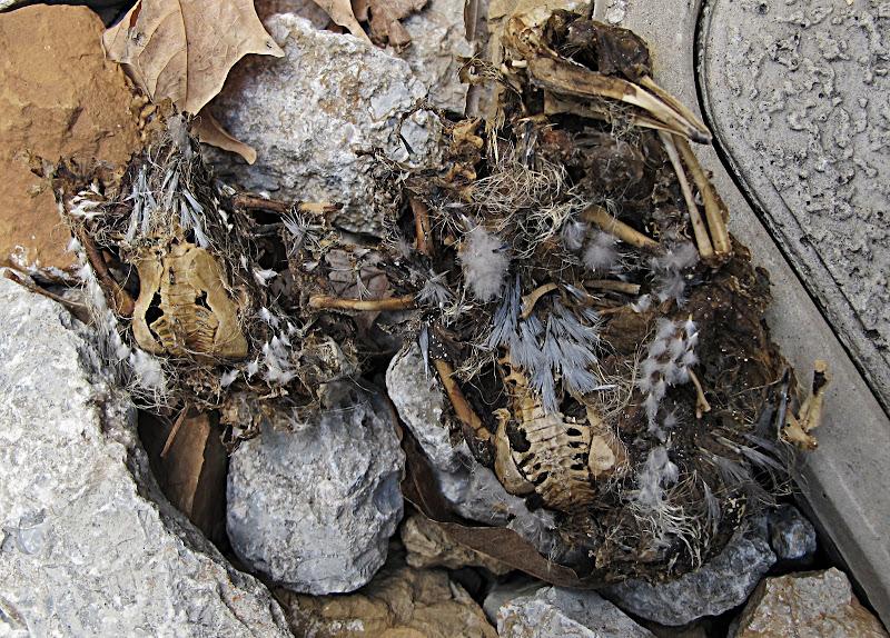 Bird skeletons in parking garage
