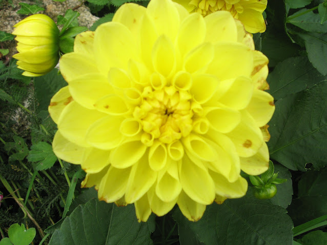 les belles fleurs  dans les fleurs auitomme+012