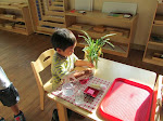 Children in Montessori learn many independence skills. here, a three-year-old boy is taking care of a plant, carefully cutting away dead leaves, and watering it.