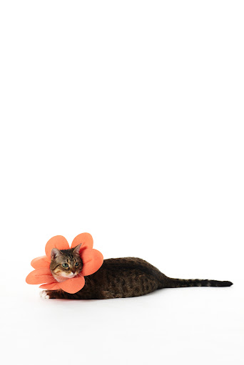 Shy at first, Rhoda quickly grew into her flower costume.