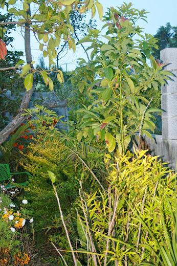 Futur jardin d'orchidées!!! - Page 2 IMG_4058