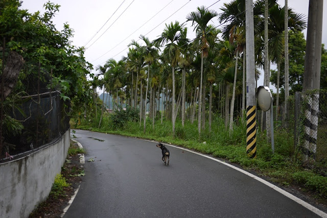 dog walking down road with palm trees on the side