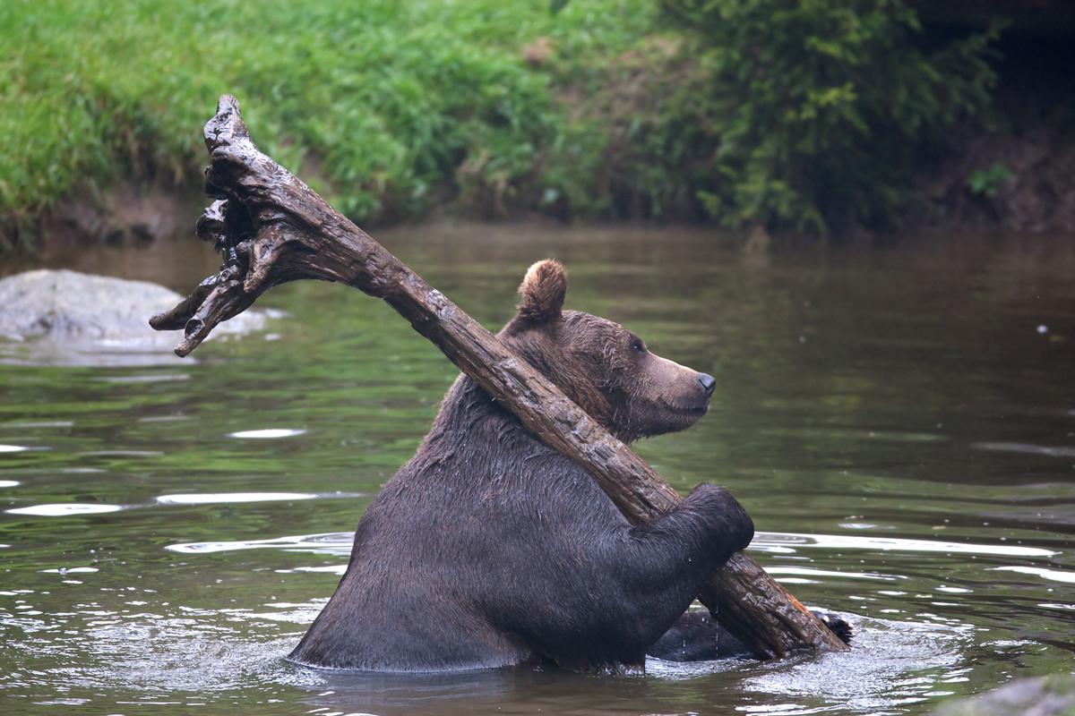 Медведь с бревном