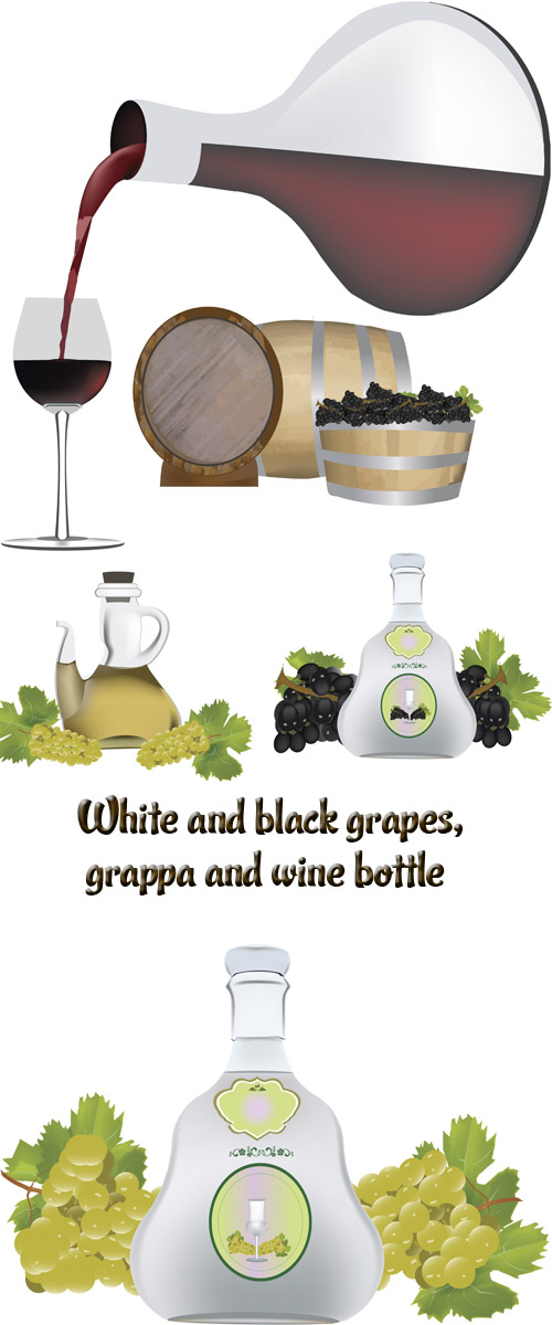 Stock: White and black grapes, grappa and wine bottle