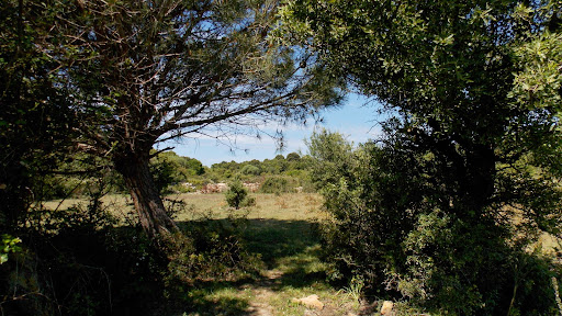 Vastes espaces agricoles de Pastricciola