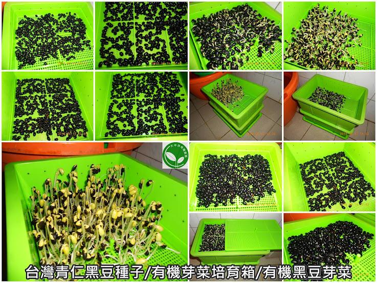 黑豆,黑豆減肥法,坐月子喝的黑豆茶,黑豆酒製作方法,黑豆水的煮法,黑豆酒購買,黑豆子,黑豆食譜,黑豆水,黑豆茶煮法