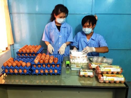 Chàng trai trẻ theo đuổi ước mơ kinh doanh trứng gà Omega-3