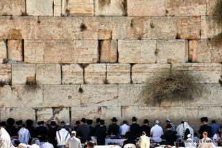 Стена плача, Иерусалим. Экскурсия Иерусалим иудейский. Гидв Иерусалиме Светлана Фиалкова.