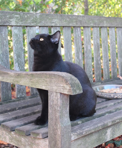 black kitten guarding the peanut dish from squirrels